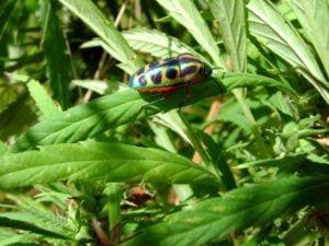Bug 750px